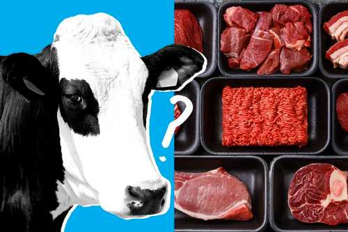 The Cattle Industry Is Having a Cow Over Whether Lab-Grown Meat Should Be Called Meat