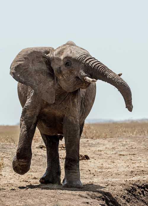 Count Your Elephants