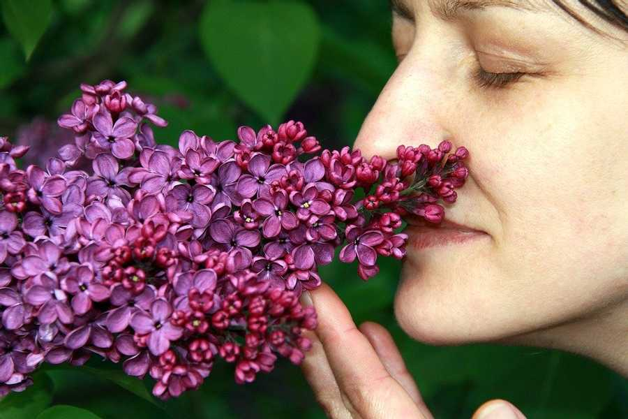 Our Sense Of Smell And Our Memories