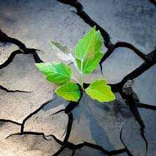Sense of resilience