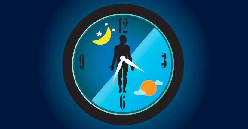 Our Internal Biological Clock