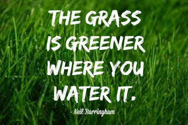 """<i>""""The grass is greener where..."""