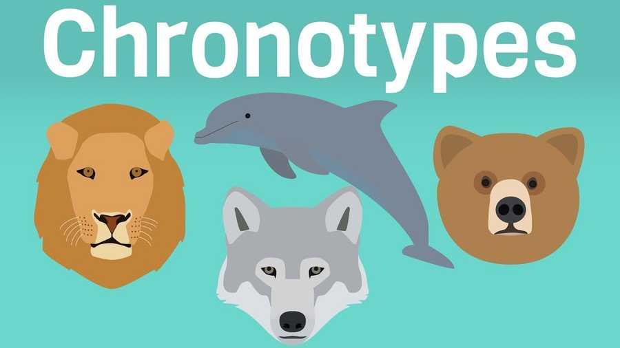 4 Types of Sleeper based on Chronotype