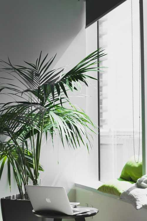 Introduce some greenery